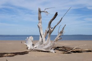 Driftwood - Drysdale River mouth